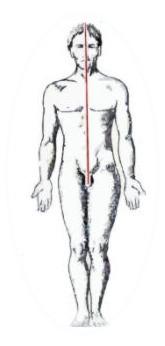 Body Wisdom - Left & Right