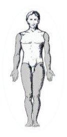 Body Wisdom - Limb & Torso