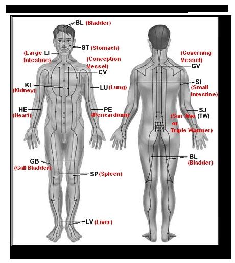 12 Major Meridians